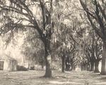 Avenue & Negro Quarters, Hermitage