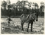 Wade Chesser, 11, Ploughing with a Mule by Francis Harper