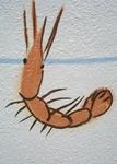 Shrimp art