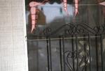 Shrimp on a window